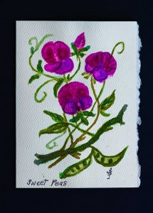 Purple Blue Sweet Peas